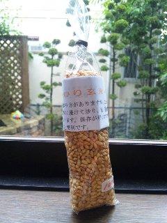 大好評炒り玄米!